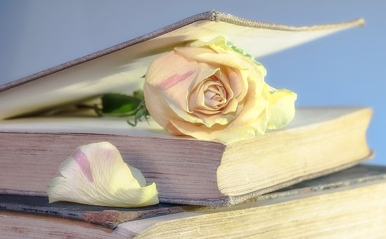 Rose, Book, Old Book, Blossom, Bloom