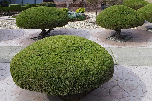 Trees, Trimmed, Shaped, Manicured