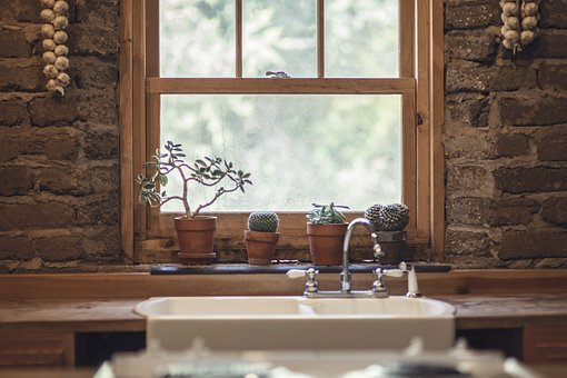 Garlic, Cactus, Window, Nature, Green