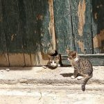 Barn Cats Near Me For Kids