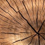 Things to Look For When Hiring a Tree Removal Service